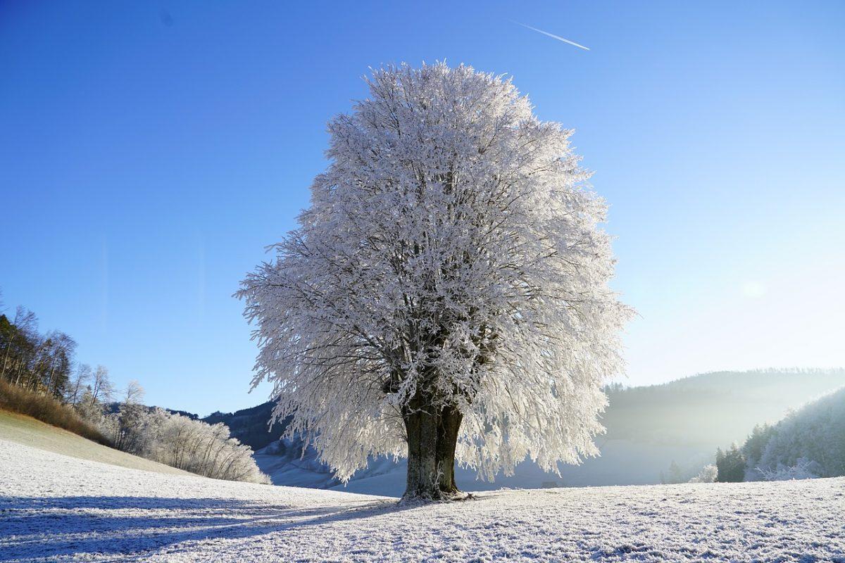 Color Poem: White